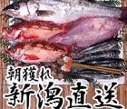 新潟朝獲鮮魚セット