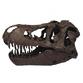 FDS-151 ティラノサウルス ビッグスカル